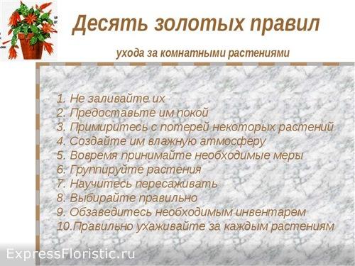 основных правилах ухода за цветами