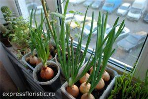лук, укроп и зелень петрушки