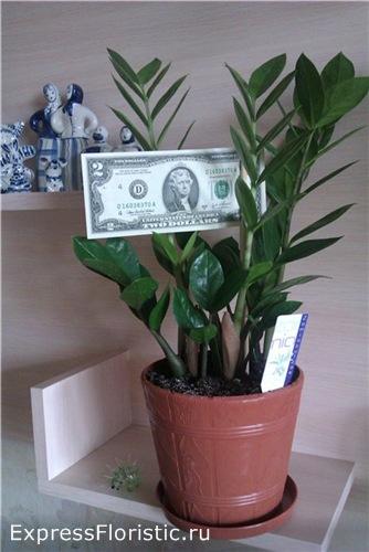 Долларовое дерево фото с деньгами