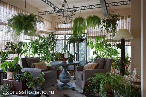 Создаём цветочный сад в квартире