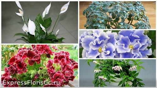 Женские цветы в доме