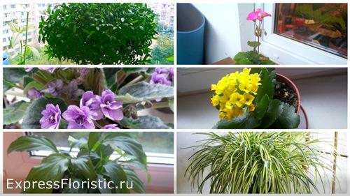 цветы которые обязательно должны быть дома