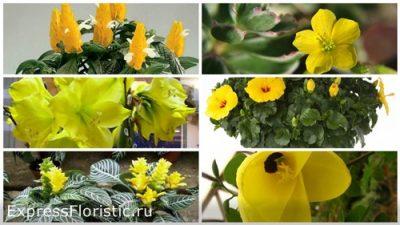 Жёлтые цветы дома