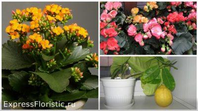Активно цветущие растения следует поместить в юго-восточном секторе