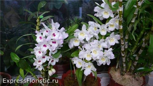 Просто дождитесь, когда орхидея расцветет