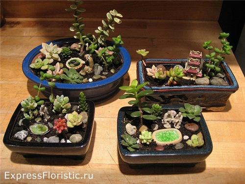 миниатюрный садик: на керамической тарелке