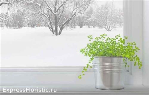полив комнатных растений зимой