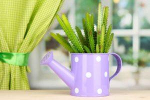 Почему нужно выращивать кактусы