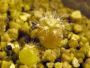 гидропоника и кактусы