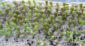 разведение кактусов из семян