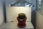 Какой свет нужен кактусам