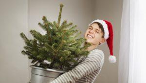 Выращиваем елку в домашних условиях.